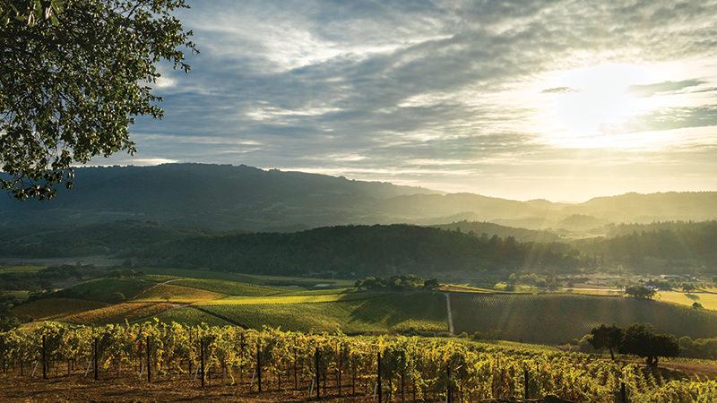 Οι 5 καλύτεροι προορισμοί του κόσμου για το κρασί - η Κρήτη στην 4η θέση!
