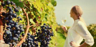 Τι σημαίνει η κλιματική αλλαγή για τη βιομηχανία του κρασιού;