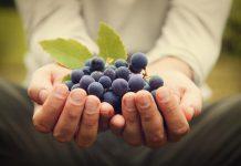 Vegan Κρασιά: Όλα όσα πρέπει να γνωρίζετε